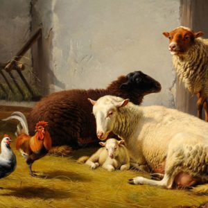 Moutons dans la bergerie oeuvre de Daniel Trammer
